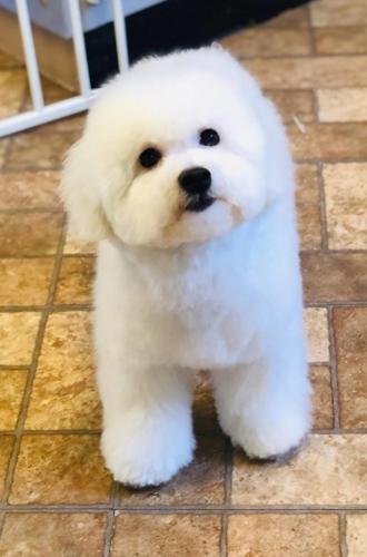 Tofu, the puppy